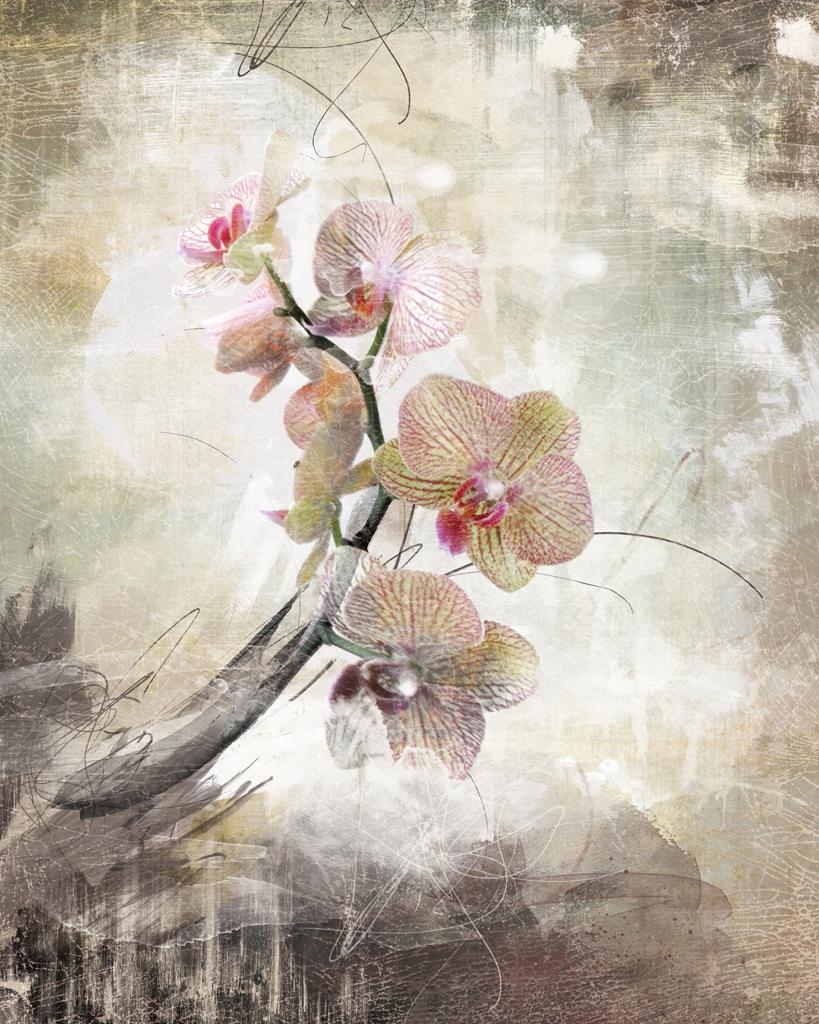 Créer un monde • Orchidée